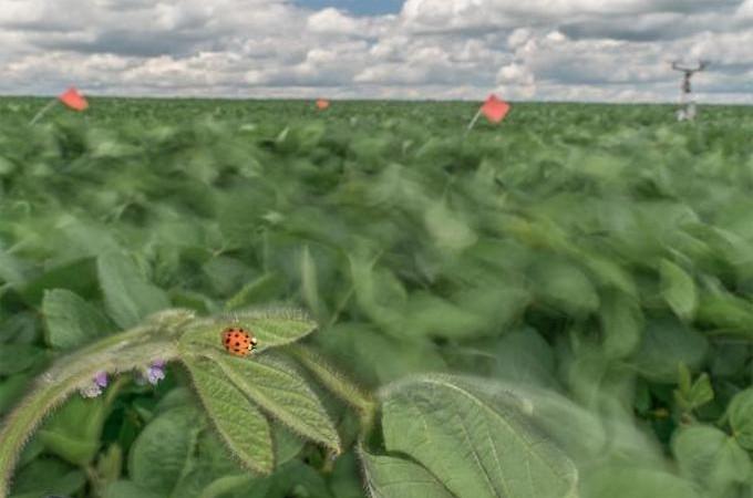 ladybug-680x450