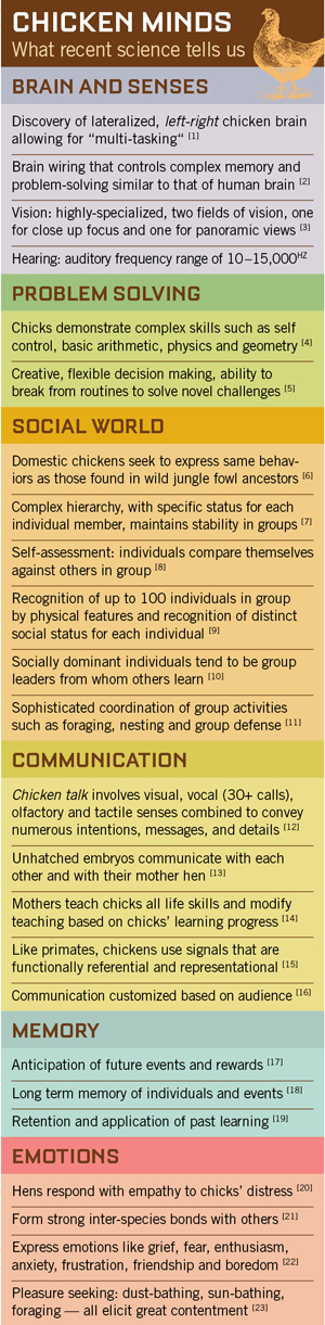 chicken_minds_infographicweb
