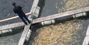 cropped-farm-fish-1